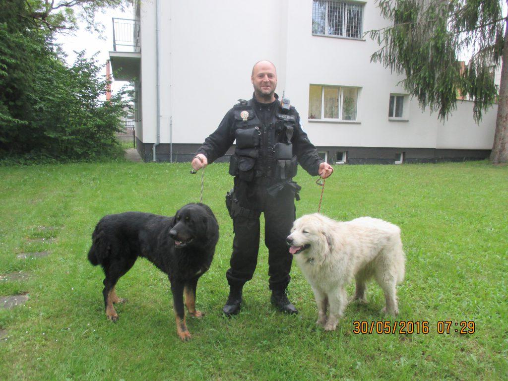 Odchyt dvou velkých psů