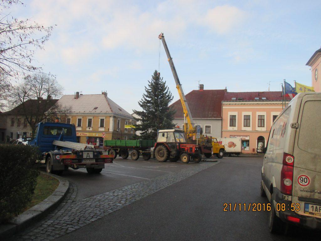 Převoz vánočního stromu