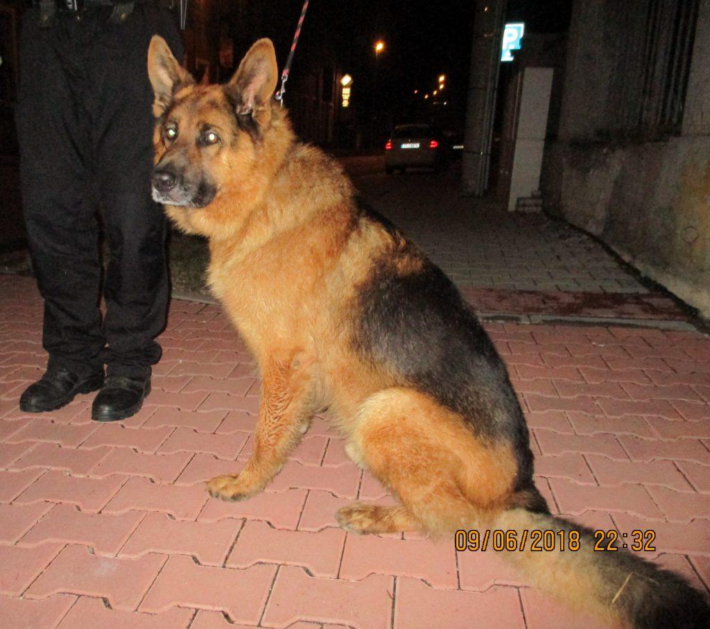 Odchyt psa v ulici Boženy Němcové