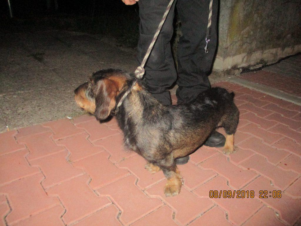 Odchyt psa – ul. Čapkova
