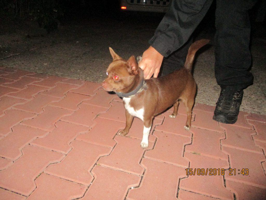 Odchyt psa v ulici Flesarova
