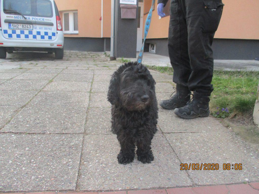 Odchyt psa v ulici Hradecká
