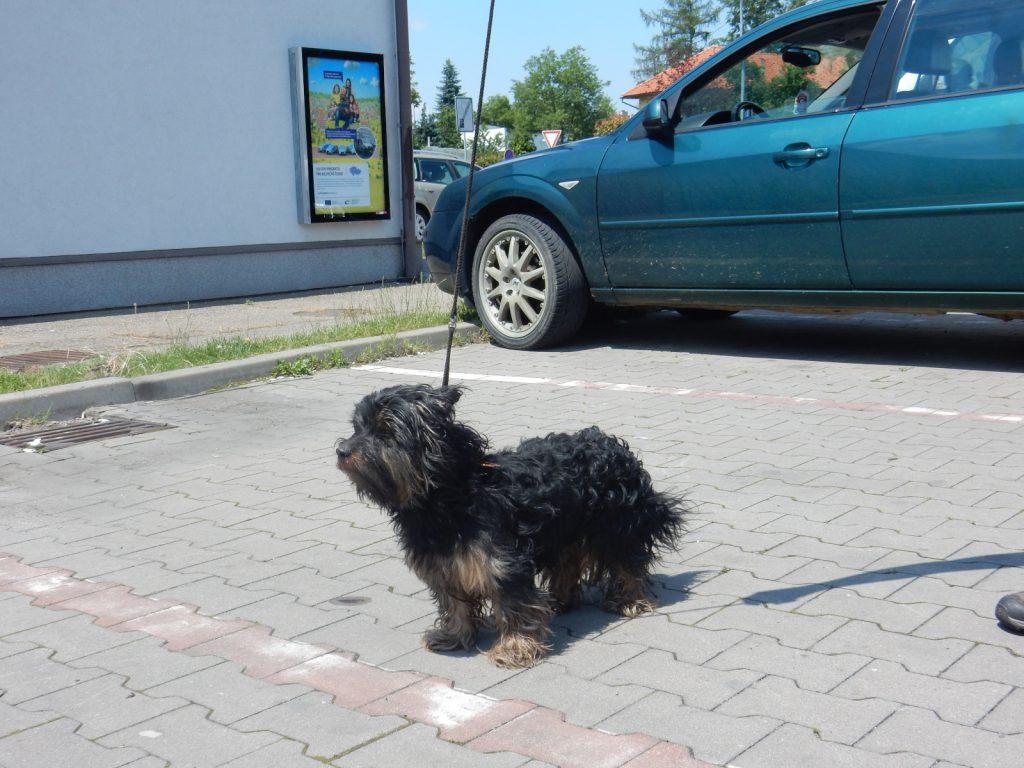 Odchyt psa - černý kříženec - Polánky nad Dědinou