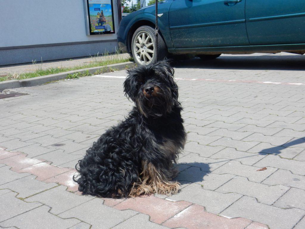 Odchyt psa – kříženec